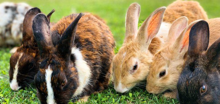Mezcal Rabbits